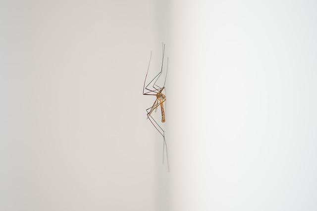 komár na zdi